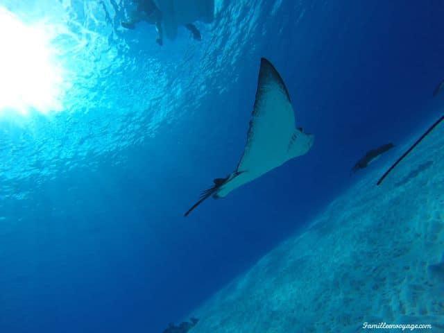 voyage en famille en polynésie