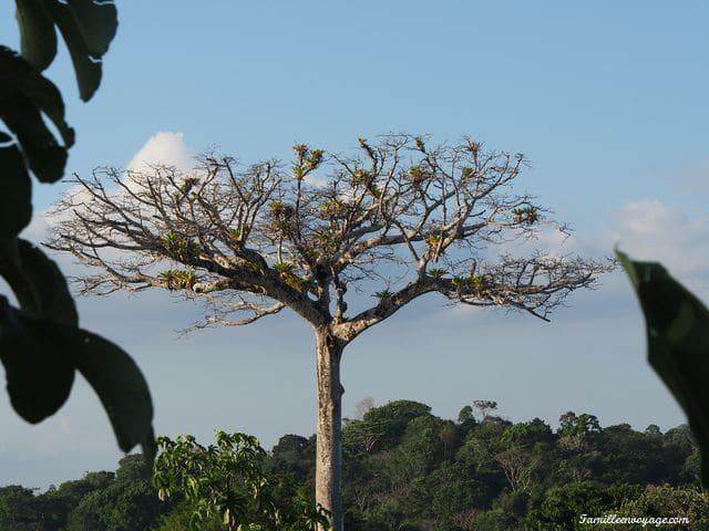 arbre costa rica