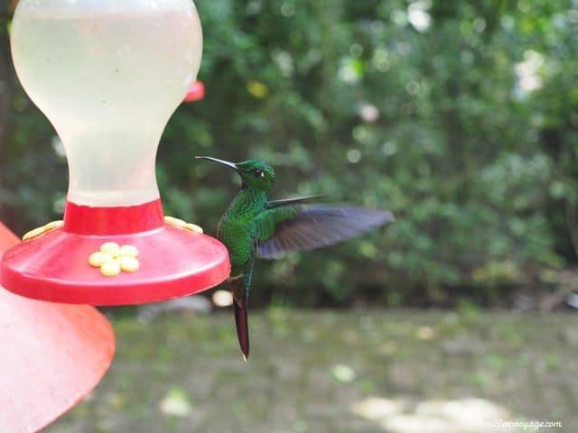 costa-rica-colibri