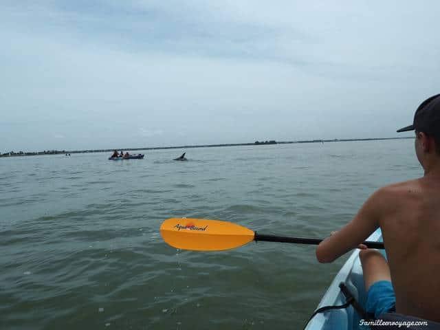 caladesi island floride dolphins