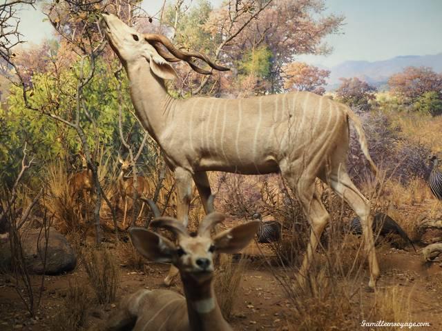 musée histoire naturelle New York