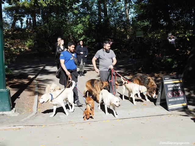 central park en automne promeneurs de chiens