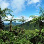 Les 20 visites à faire – Voyage en Guadeloupe