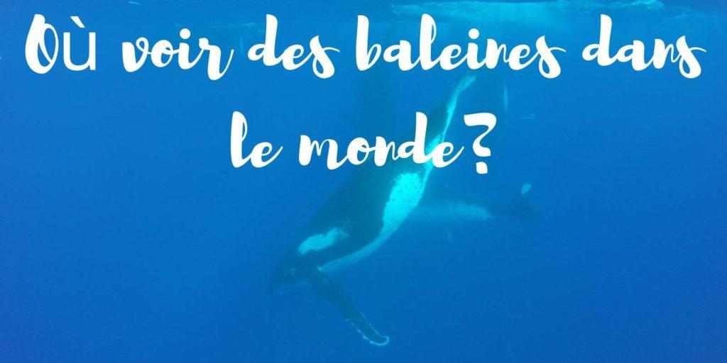 baleines3